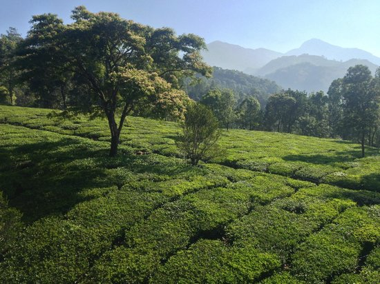 Gruenberg Tea Plantation Haus: View from rooftop