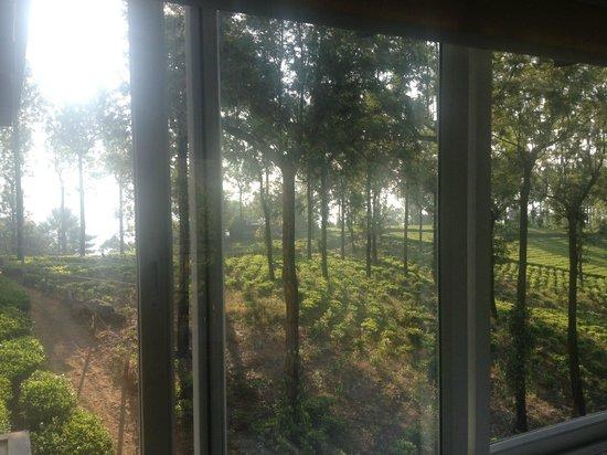 Gruenberg Tea Plantation Haus: View from room