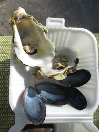 Cooters Restaurant & Bar : Doesn't the oyster look like it's already been eaten?