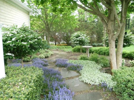 Blue Iris Bed and Breakfast: Bluestone path