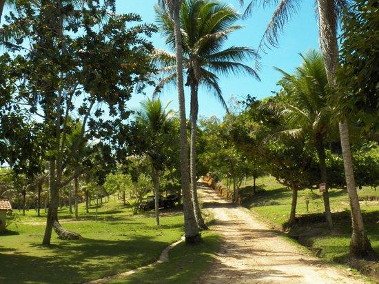 Fazenda Mae Tereza: area verde muito bem cuidada