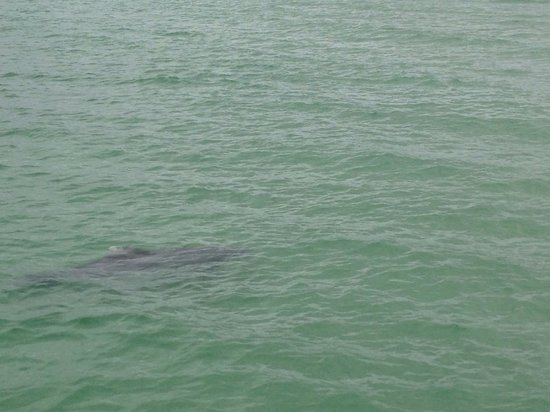 Sunrise Garden Resort: Saw a dolphin off of the Anna Maria Pier!