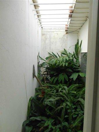 Casa Hernandez: Un pequeño jardincito cubierto desde la ventana del baño.