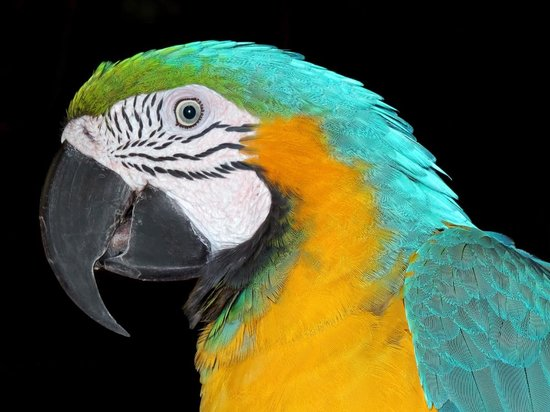 Ocean World Adventure Park, Marina and Casino : Blue-and-Yellow Macaw Richard C. Murray/RCM IMAGES, INC