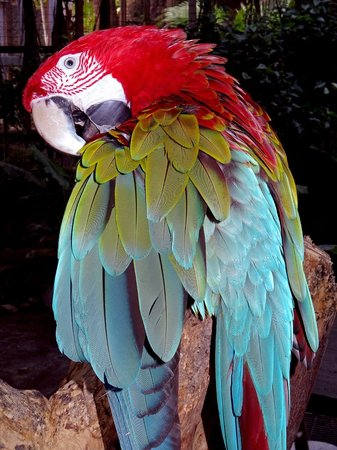 Ocean World Adventure Park, Marina and Casino : Scarlet Macaw Richard C. Murray/RCM IMAGES, INC