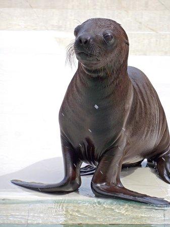 Ocean World Adventure Park, Marina and Casino : Sea Lion Pup Richard C. Murray/RCM IMAGES, INC