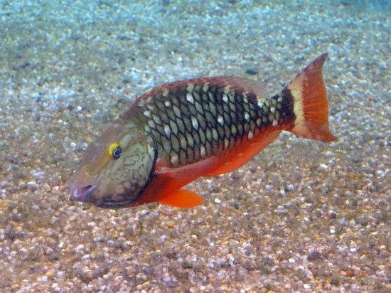 Ocean World Adventure Park, Marina and Casino : Aquarium Fish Richard C. Murray/RCM IMAGES, INC