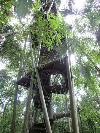 Panama Rainforest Discovery Center: Observation Tower