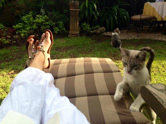 Villa Ganz: jardin / garden con el gato mas cariñoso del mundo