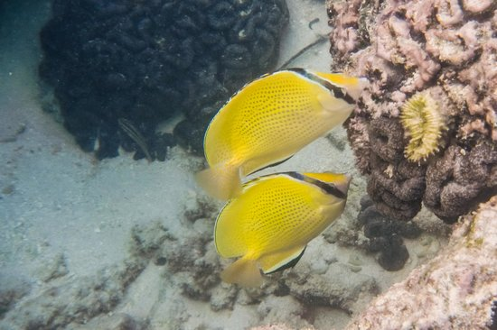 Royale Takitumu: Snorkeling the Lagoon