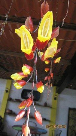 Arbol de Fuego Eco-Hotel: Tree of fire flower