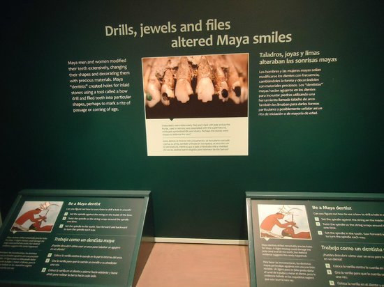 Denver Museum of Nature & Science: cosmetic dentistry favored by wealthy Mayans