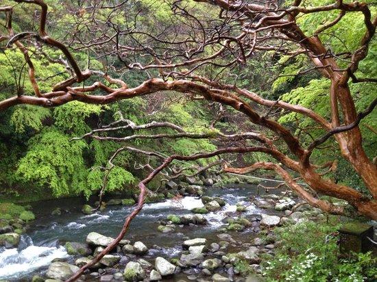 Fukuzumiro Ryokan : View outside our room