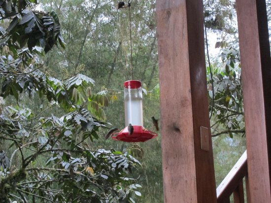 Dragonfly Inn B&B: Hummingbird feeder on patio