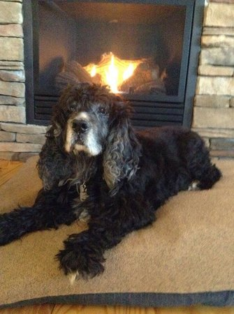Barkwells, The Dog Lovers' Vacation Retreat: Mungo enjoying the fireplace in the 