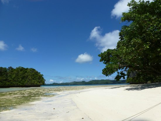 Fish 'n Fins Palau: Rock Islands