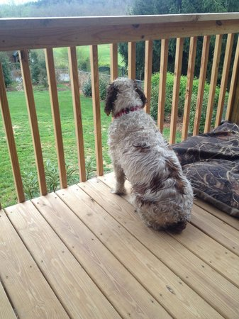 Barkwells, The Dog Lovers' Vacation Retreat: Magoo on the porch of the Fisher cabin wishing the rain would stop so we could bring him down to