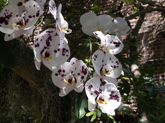 Key West Garden Club: Orchids