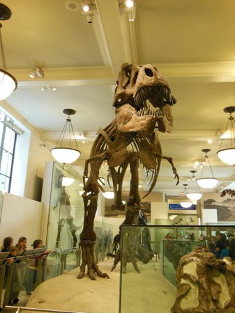 American Museum of Natural History: Museum of Natural History