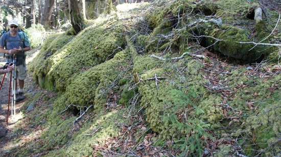 A Walk in the Woods : moss