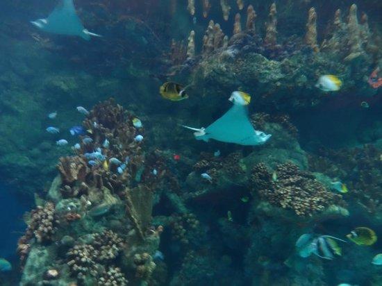 Aquarium at Seaworld - Picture of SeaWorld San Antonio ...