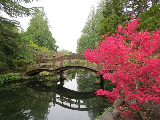 Hatley Park National Historic Site: Japanese garden