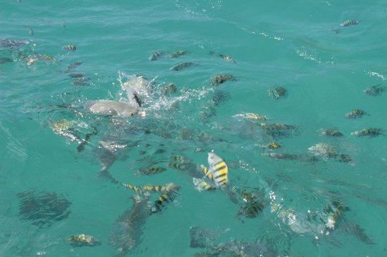 Isla Mujeres Trips, Info & Tours Center by Mariel: snorker