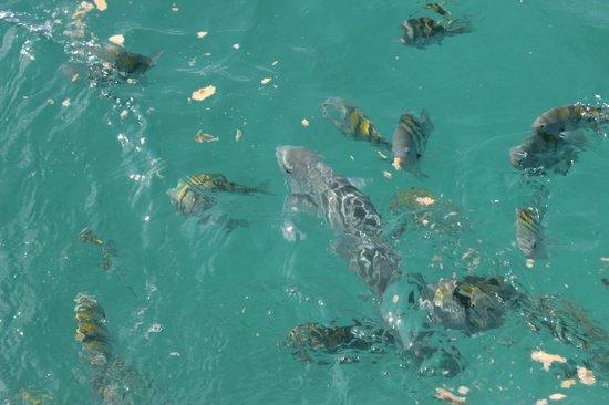 Isla Mujeres Trips, Info & Tours Center by Mariel: snorkel