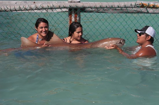 Isla Mujeres Trips, Info & Tours Center by Mariel: fotografías con el tiburon