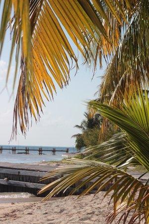 Isla Mujeres Trips, Info & Tours Center by Mariel: playa