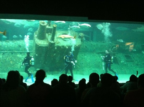 live dive - Picture of North Carolina Aquarium at Pine ...