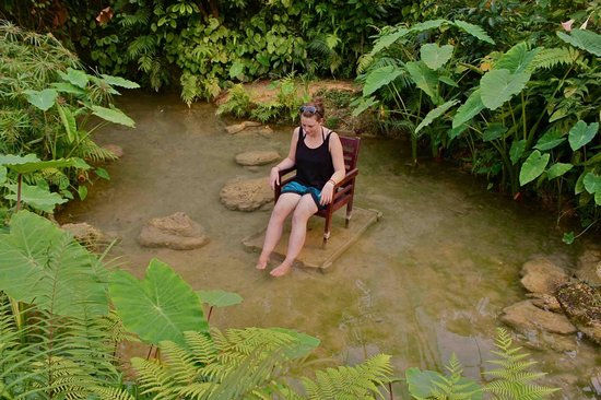 Kuang Si Falls Butterfly Park : Letting the doctor fish feed on me in the butterfly park
