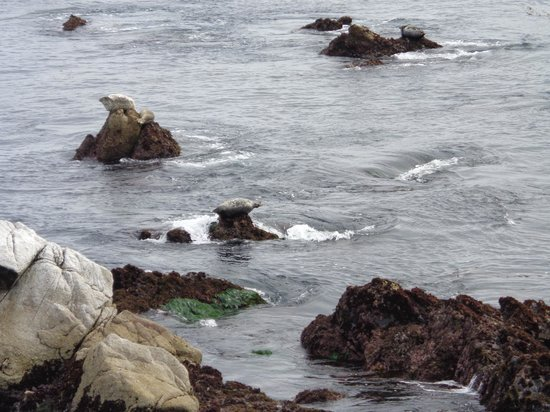 Seven Gables Inn: seals on the beach