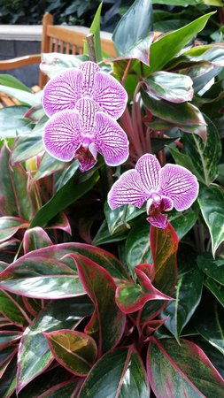 Gaylord Palms Resort & Convention Center: Only a few of the flowers in bloom in the Gaylord.
