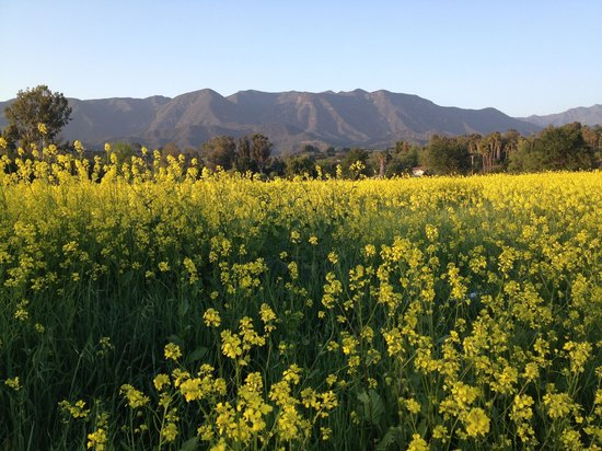 Ojai, Kalifornien: Stunning - the camera does it no justice.
