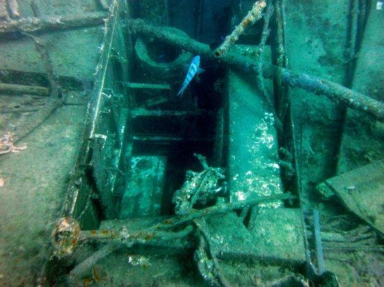Dressel Divers Bayahibe : Sumergidos en el Atlantic Princess
