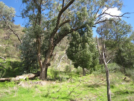 Warby Ovens National Park: the track