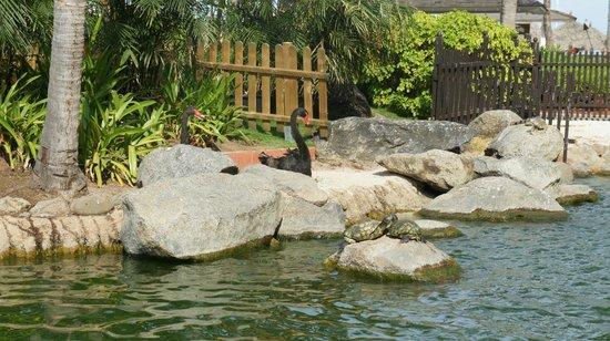 Hyatt Regency Aruba Resort and Casino: In the garden