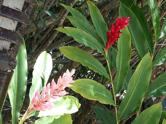 Hacienda Tres Ríos: Flowers