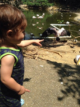 Neo Park: He really loves birds.