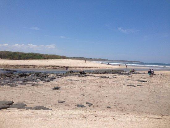 Occidental Tamarindo : Playa barcelo langosta