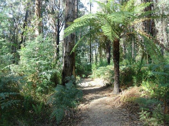Lyrebird Forest Walk