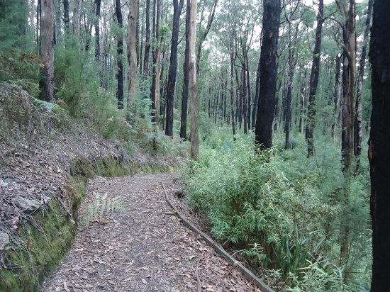 Mirboo North, ออสเตรเลีย: Lyrebird Forest Walk