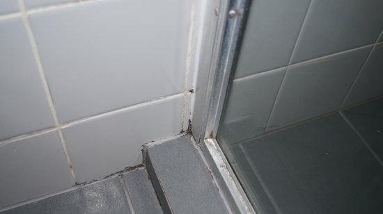 Oaks Embassy Apartment Hotel : MOULD