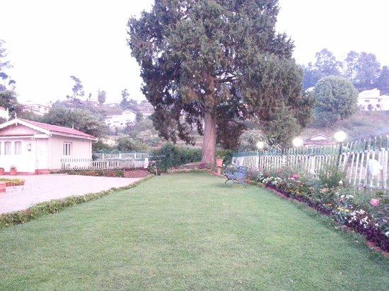 Bouganvilla: Front  Lawn