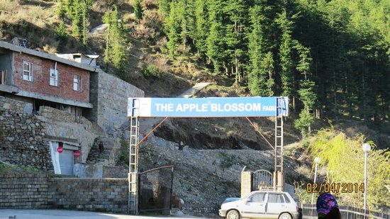 The Apple Blossom: Entrance of hotel
