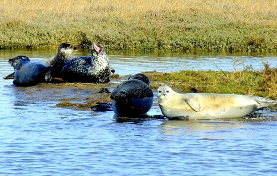 Rib Request - Day Tours: #Seal trip