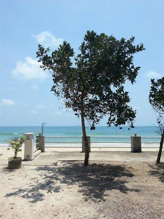 View Seafood Resort: Baum