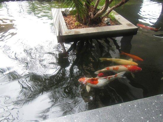 Wyndham Sea Pearl Resort Phuket: Koi fish all around the reception area