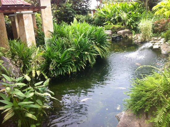 Shangri-La's Rasa Sentosa Resort & Spa: Японский садик:)